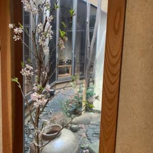 さかふね桜